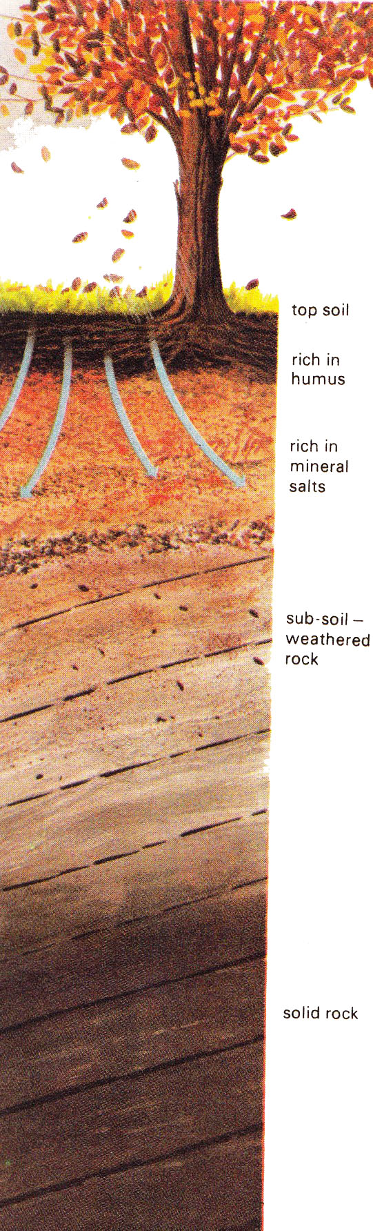 Facts about Rocks and Soils